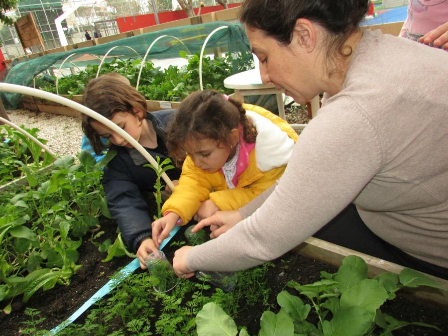 Gardening (4)